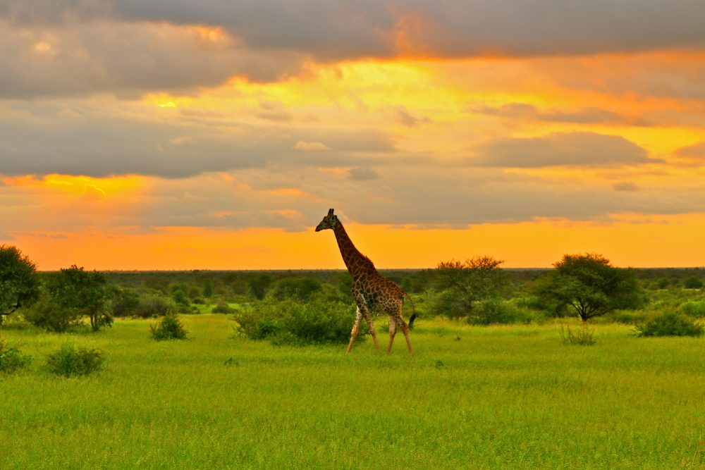 Safari holidays with Bon Vivant Travel