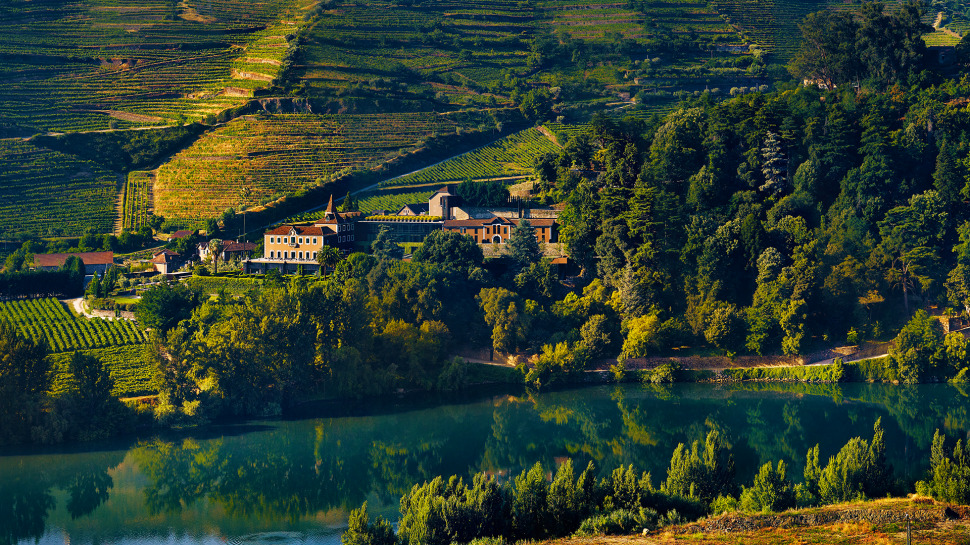 the vineyards at the Six Senses Douro Valley